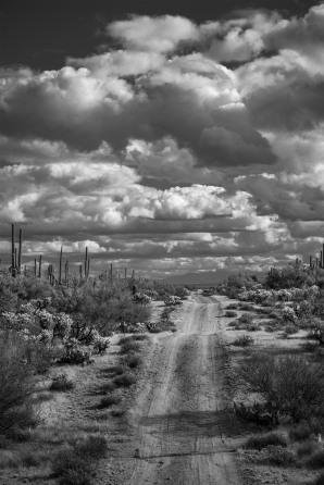 """The Road I Walk 36"""" x 24""""   $3,350"""